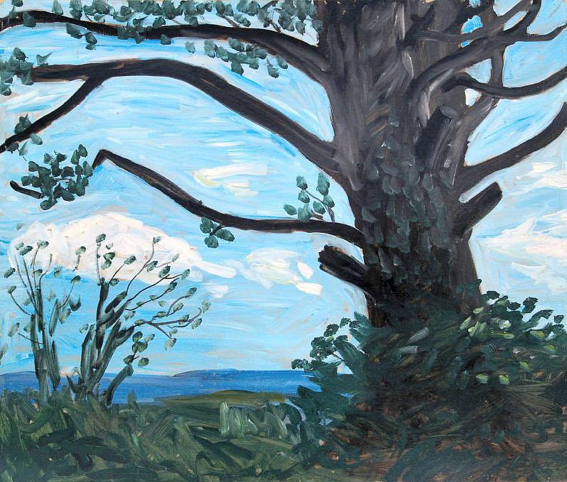 Beech Tree by Tadhg McSweeney