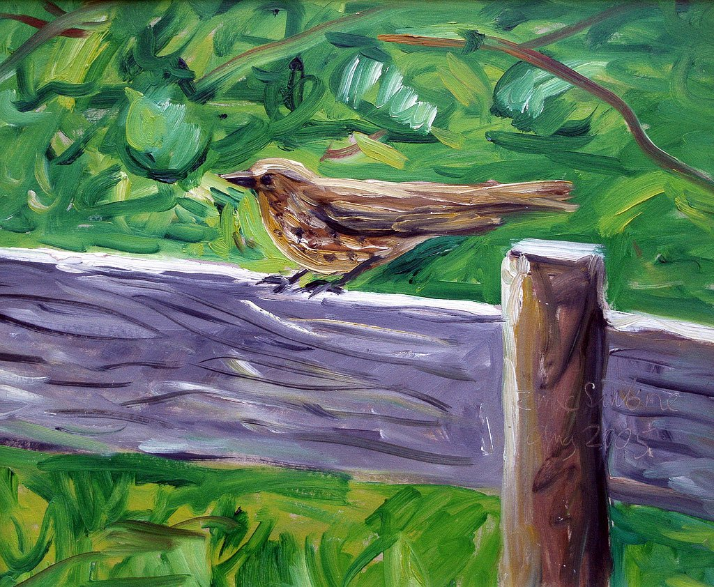 Bird on fence by Tadhg McSweeney