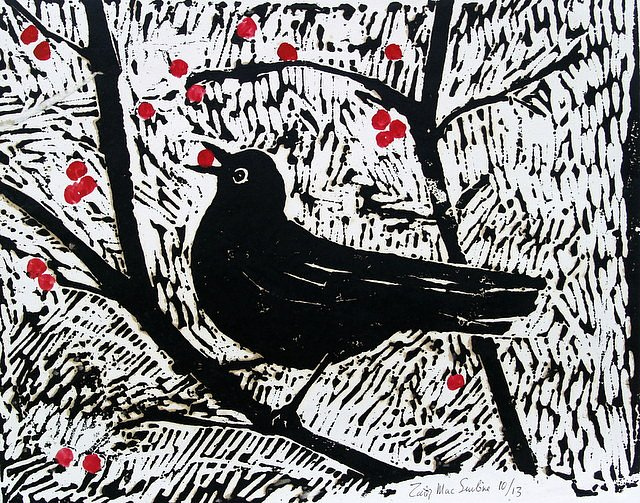 Blackbird eating berries by Tadhg McSweeney