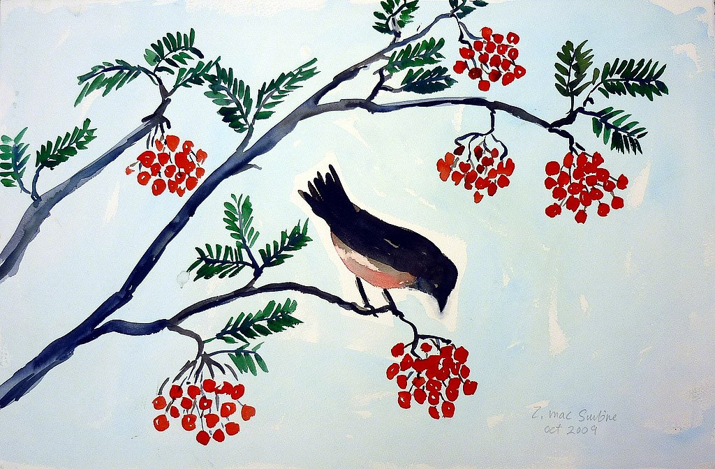 Bullfinch eating rowan berries by Tadhg McSweeney