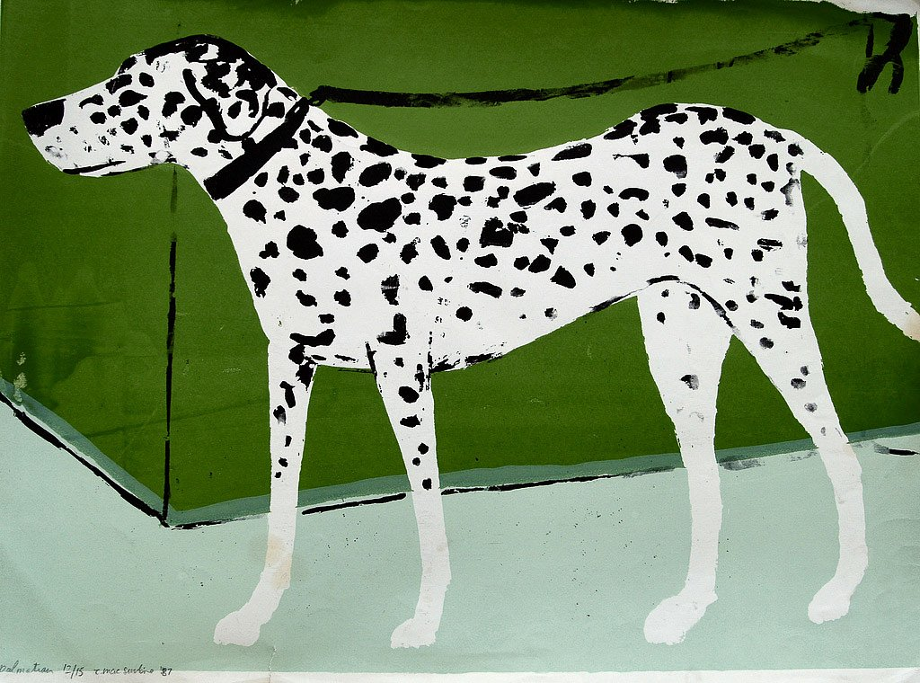 Dalmatian by Tadhg McSweeney