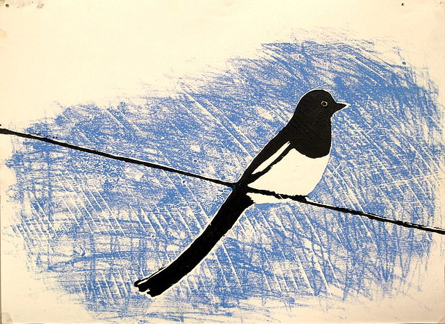 Magpie on wire by Tadhg McSweeney