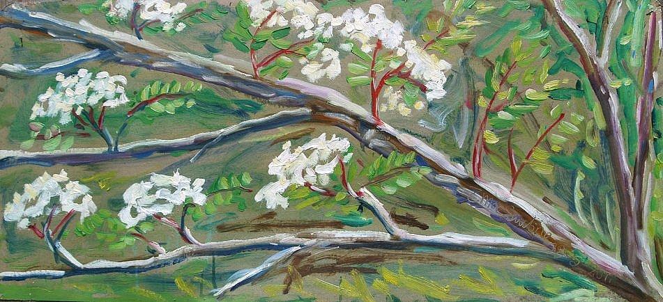 Rowan blossom by Tadgh McSweeney