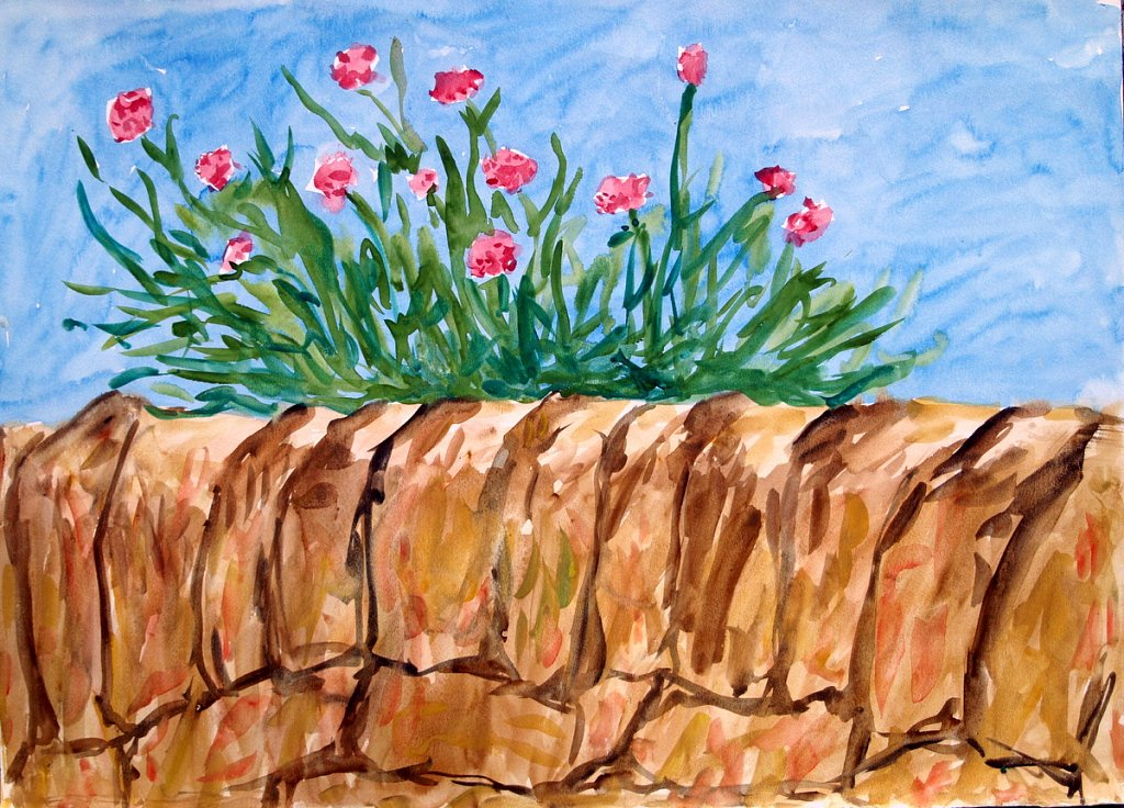 sea pinks on wall by Tadhg McSweeney