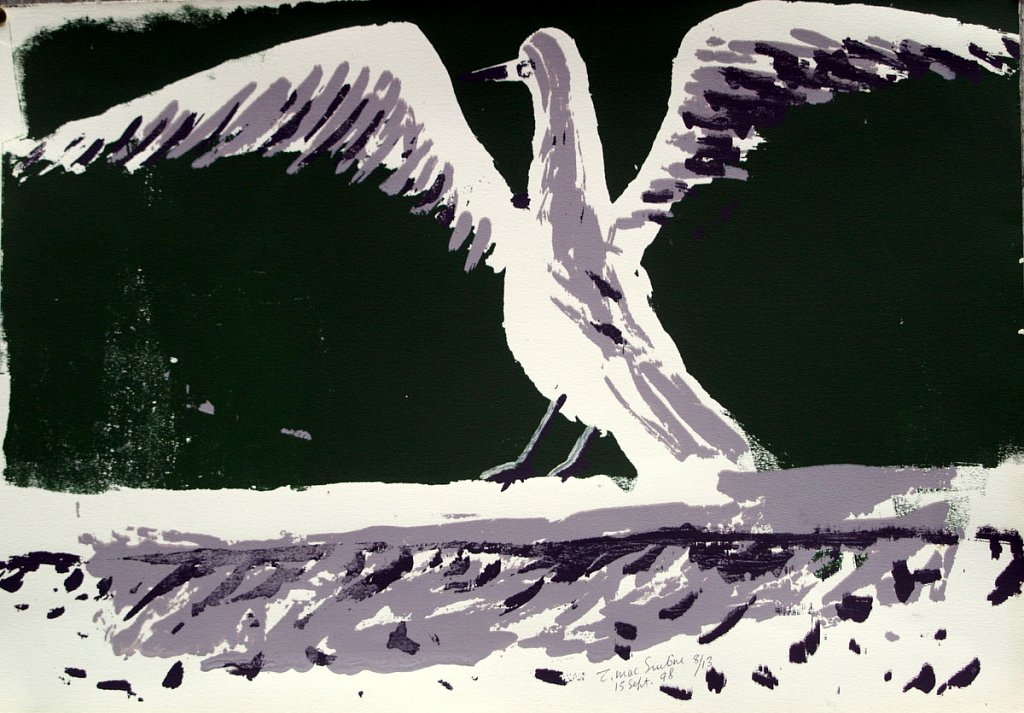 seagull on wall by Tadhg McSweeney