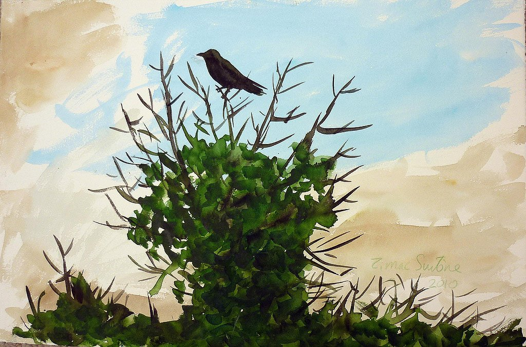 The Blackbird 1 by Tadhg McSweeney